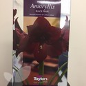 Amaryllis Gift Pack