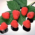 Raspberry Collection 1 Saving 2.50
