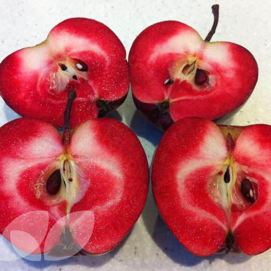 apple redlove odysso fruit trees for sale self fertile. Black Bedroom Furniture Sets. Home Design Ideas