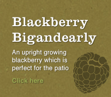 Blackberry Bigandearly Banner