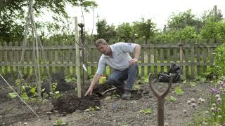 Planting Your Fruit Tree | Bare Root And Potted