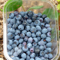 Blueberry Collection 2 Saving £3.00 (Blueberry & Cranberry)