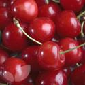 Cherry Stella