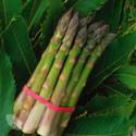 Guelph Millennium (AGM) (Asparagus Crowns)