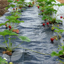 Bed Mat (Strawberry Runners)