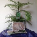 Wollemi Pine Trees (Gift Ideas & Vouchers)