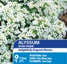 Alyssum Snow Carpet