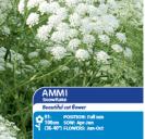 Ammi Snowflake