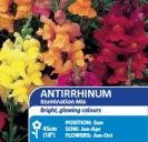 Antirrhinum Illumination Mix