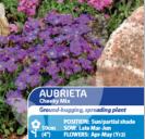 Aubrieta Cheeky Mix Perennial