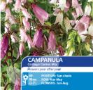 Campanula Cottage Garden Mix