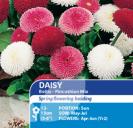 Daisy Bellis Pincushion Mix