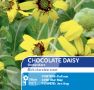 Chocolate Daisy Berlandiera