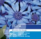 Felicia Pretty Blue