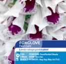 Foxglove Pam's Split