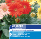 Gerbera Cut Flower Mix