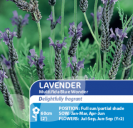Lavender Multifida Blue Wonder