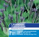 Lavender Multifida Blue Wonder