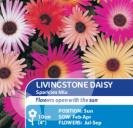 Livingstone Daisy Sparkles Mix