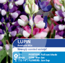 Lupin Avalune Mix