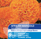 African Marigold Space Hopper