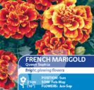 French Marigold Queen Sophia
