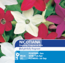 Nicotiana Evening Fragrance Mix