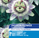 Passion Flower Passiflora caerulea