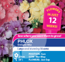 Phlox Delight Mix
