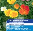 Californian Poppy Vivid Mix