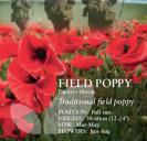 Field Poppy Papaver rhoeas