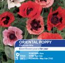 Poppy Oriental Pizzicato Mix