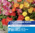 Californian Poppy XL Jelly Beans