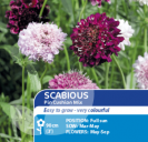 Scabious Pin Cushion Mix