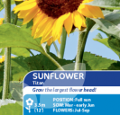 Sunflower Titan