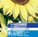 Sunflower Moonshine