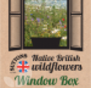 Native British Wildflowers Window Box Mix