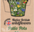 Native British Wildflowers Patio Pots Mix