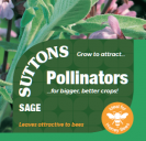 Sage (Pollinators)