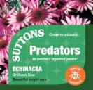 Echinacea Brilliant Star