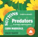 Corn Marigold