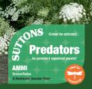 Ammi Snowflake (Predators)