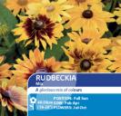 Rudbeckia Mix