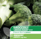 Broccoli Calabrese Autumn Spear