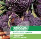 Broccoli Purple Sprouting