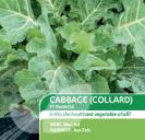 Cabbage (Collard) F1 Sweetie