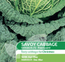 Cabbage Savoy Ormskirk 1 - Rearguard