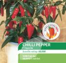Chilli Pepper F1 Apache