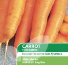 Carrot F1 Resistafly