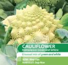 Cauliflower Romanesco White and Green